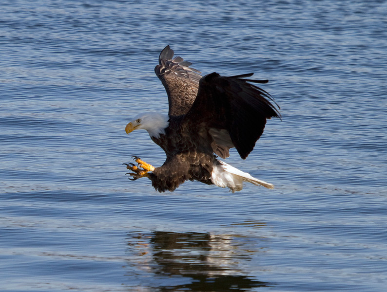 Iowa eagles 17(2010)