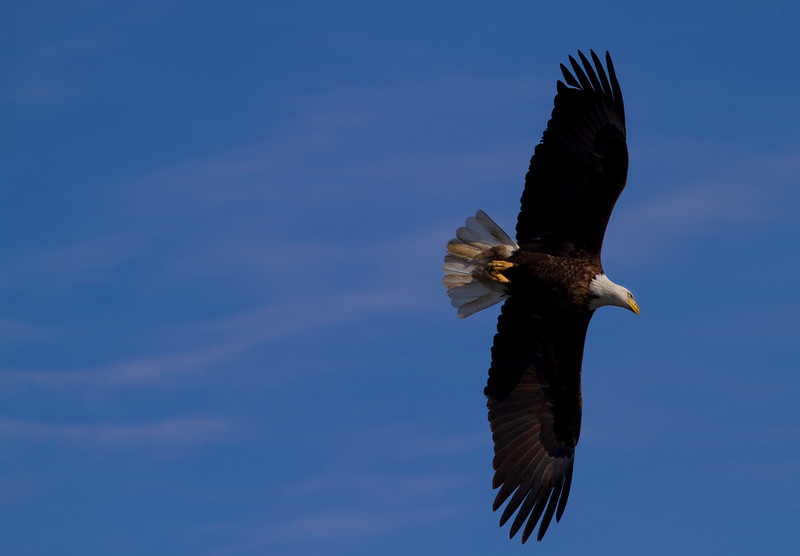 Iowa eagles 41 (2010)