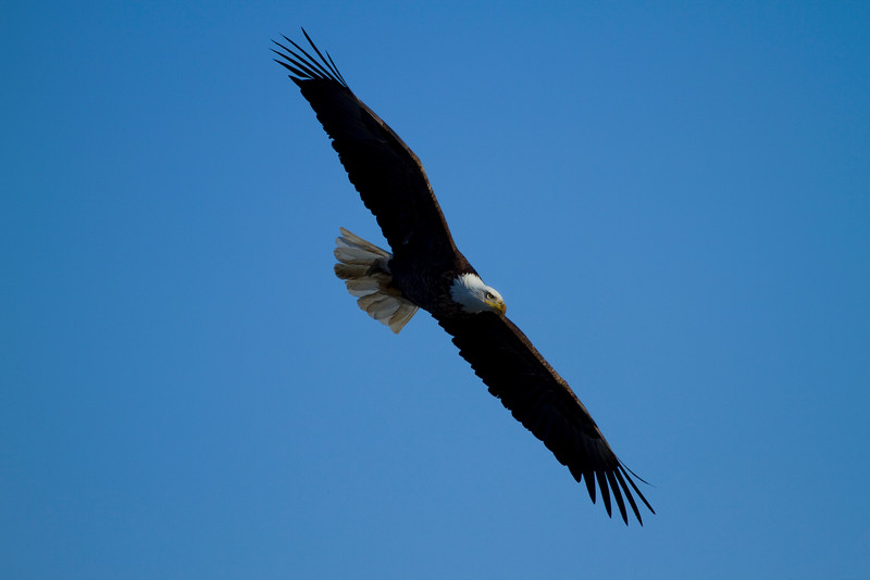 Iowa eagles 39 (2010)