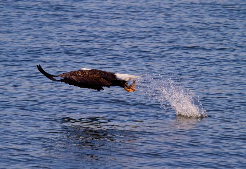 Iowa eagles 14 (2010)