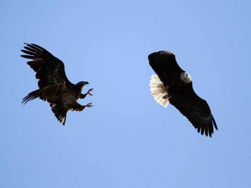 Iowa eagles 54 (2010)