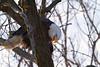 Iowa eagles 8 (2010)
