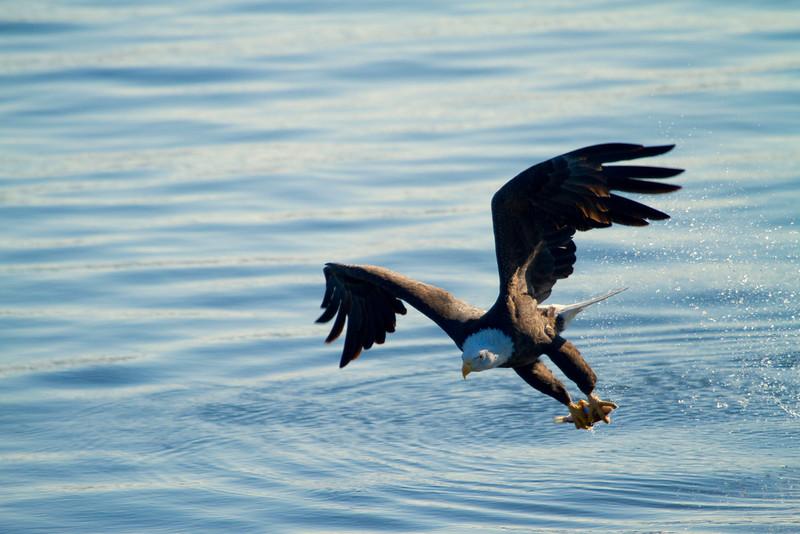 Iowa eagles 21 (2010)