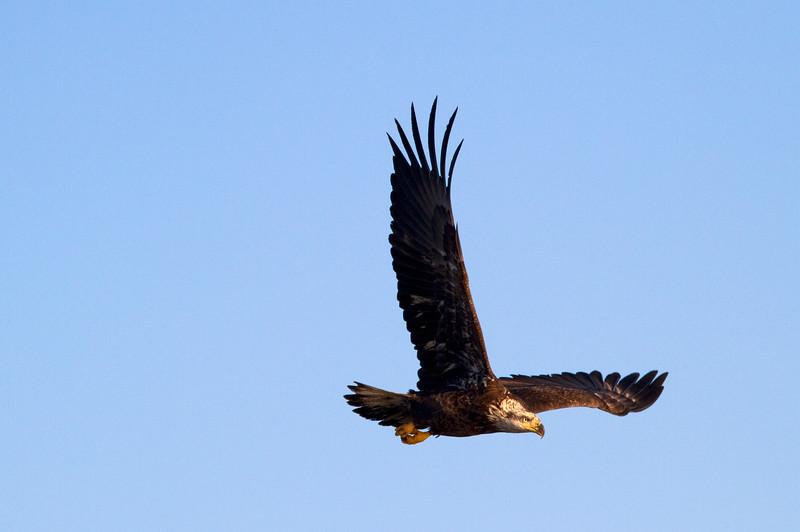 Iowa eagles 52 (2010)