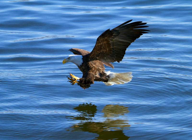 Iowa eagles 49 (2010)