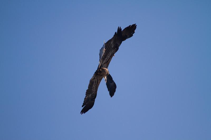 Iowa eagles 55 (2010)