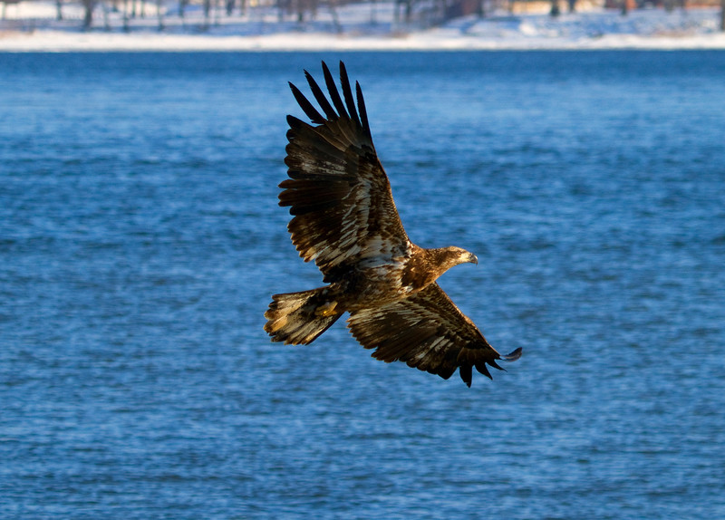 Iowa eagles 51 (2010)