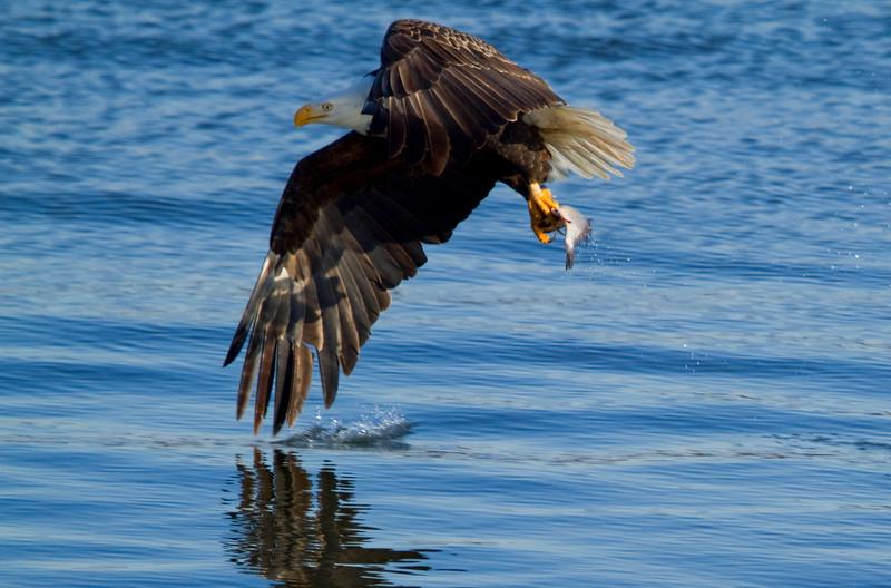 Iowa eagles 12 (2010)