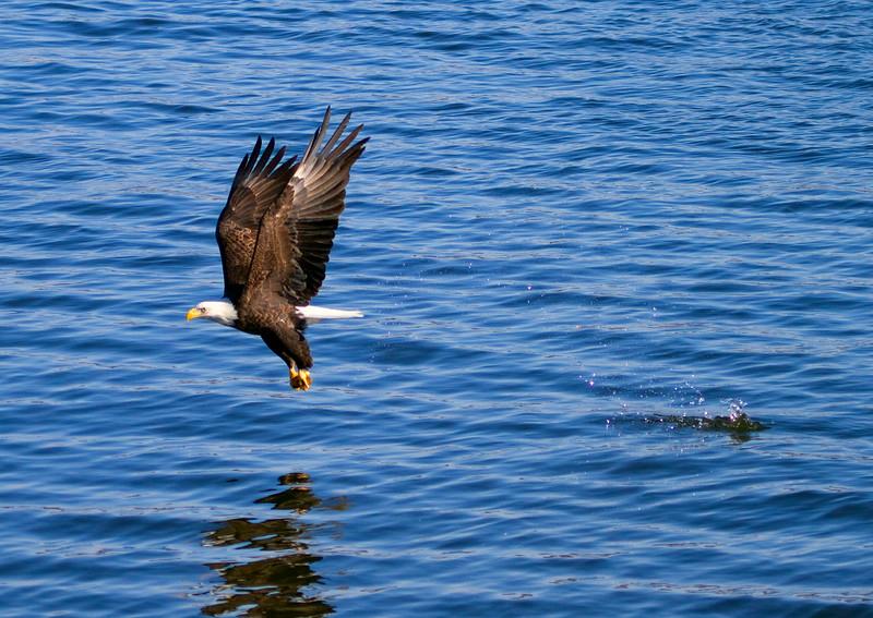 Iowa eagles 23 (2010)
