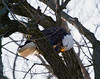 Iowa eagles 2 (2010)