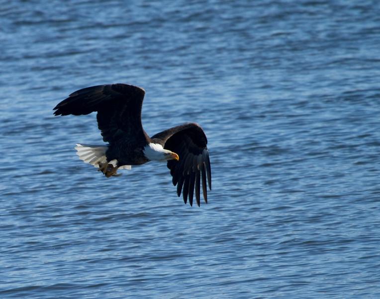 Iowa eagles 30 (2010)