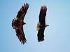 Iowa eagles 57 (2010)