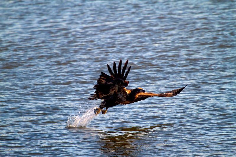 Iowa eagles 32 (2010)