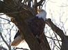 Iowa eagles 1 (2010)