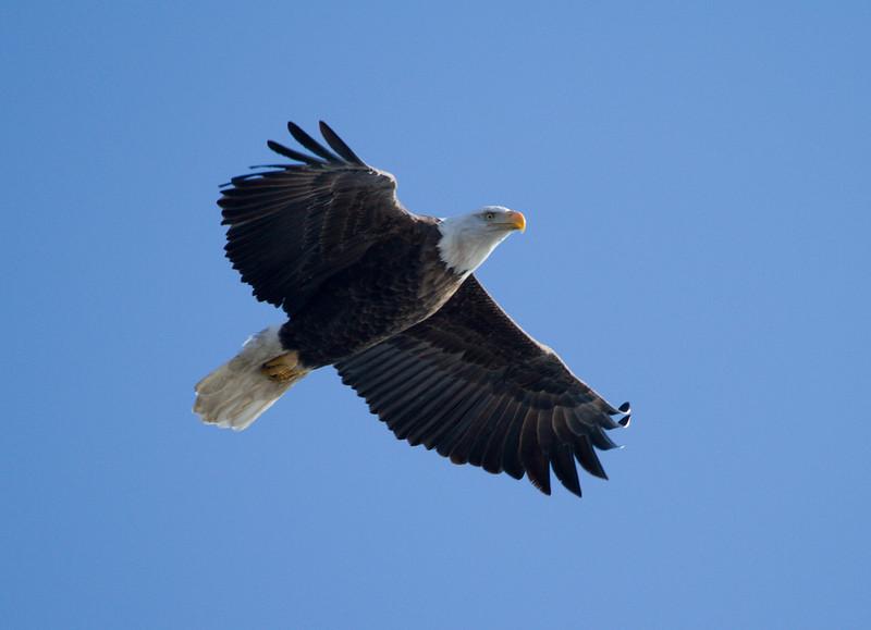 Iowa eagles 34 (2010)