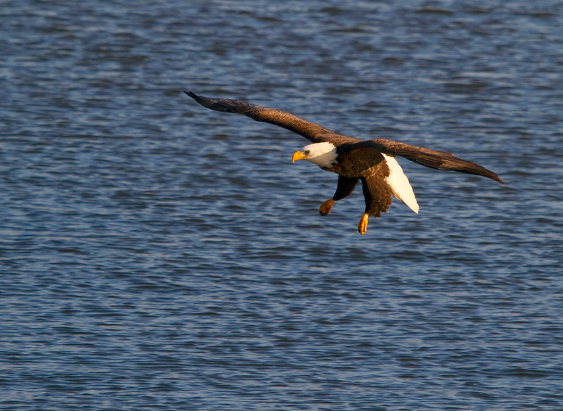 Iowa eagles 43 (2010)