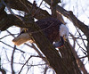 Iowa eagles 7 (2010)