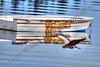 Blue Heron Boat