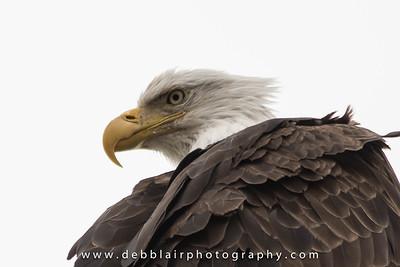 Eagle 114