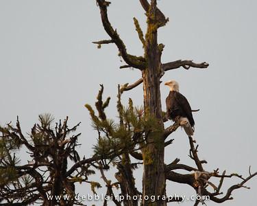 Eagle 122