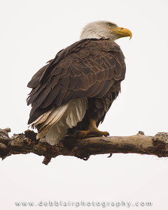 Eagle 112