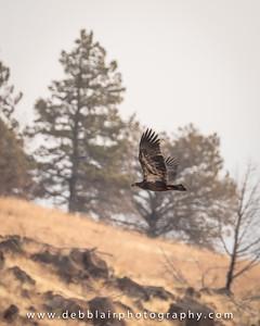 Eagle 140