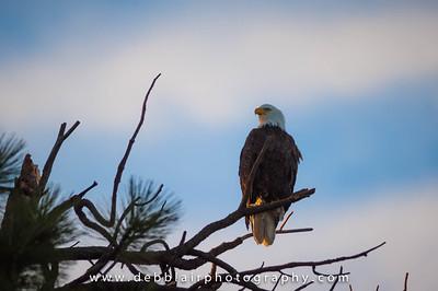 Eagle 139