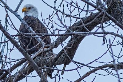Eagles (02_12_2016)-1-3