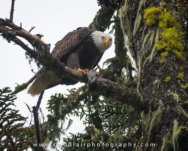 Eagle 30