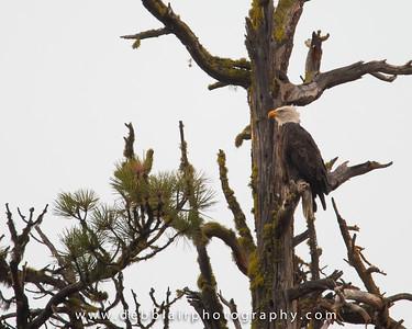 Eagle 124
