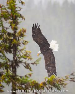 Eagle 34
