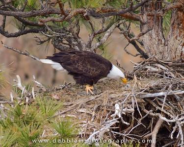 Eagle 103