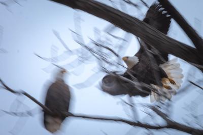 Eagles (02_12_2016)-3
