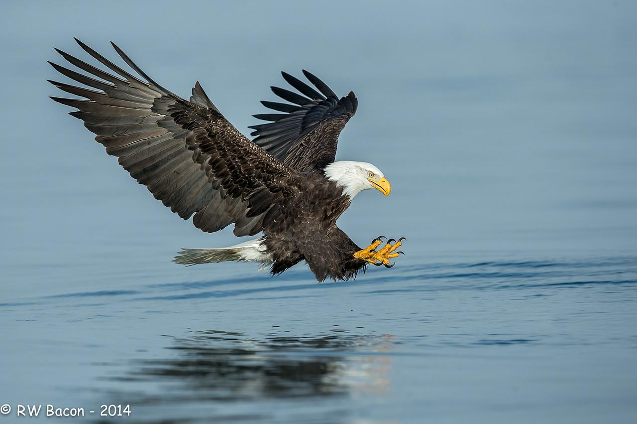 Homer Eagle - Final Stretch