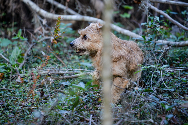 Tampa Bay Terrier Club 12_2_17