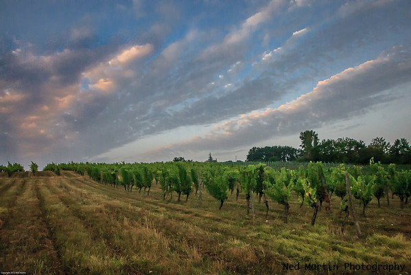 Vineyards of Terroir Feely, Saussignac, France
