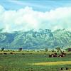 Carson Valley Nevada 9/17/1950