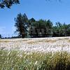 Morris Ranch, Yolo County 5/15/1959