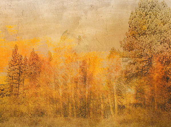 woodland ...
