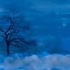 lone tree ...