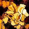 lichen ...