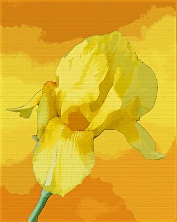 spring specimen ...
