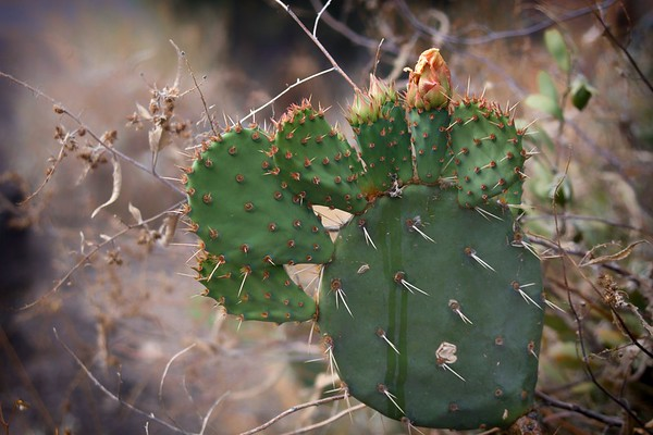 prickled ...