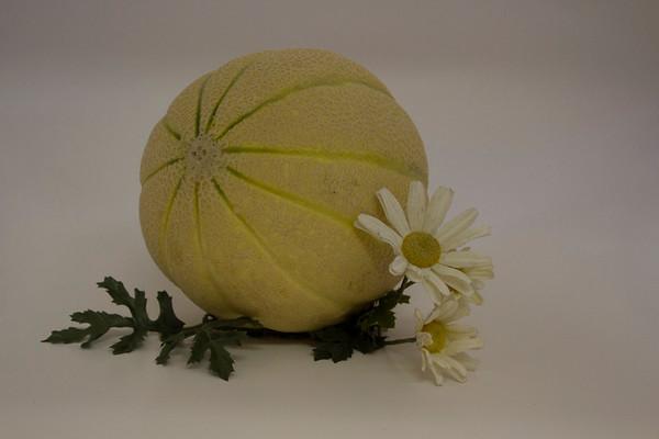 mellow melon ...