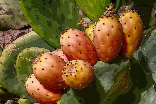 juicy fruit ...