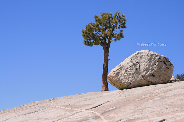 lone tree standing ...