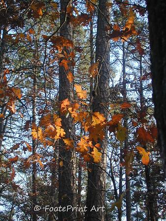 arkansas autumn ...