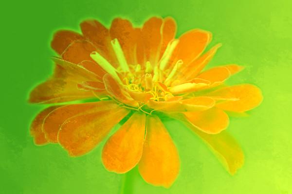 feigned flower ...