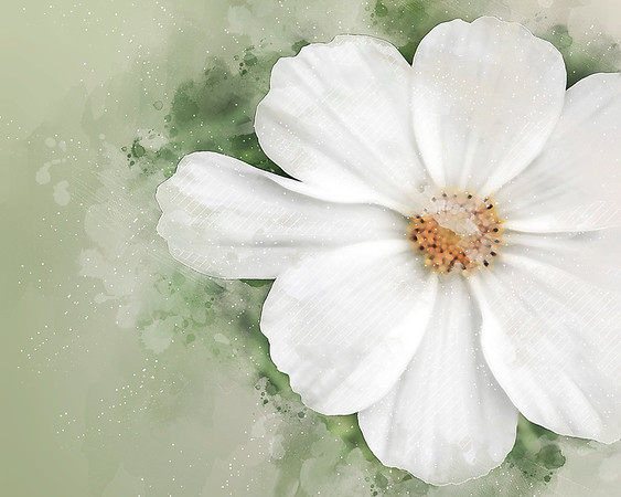dainty daisy ...