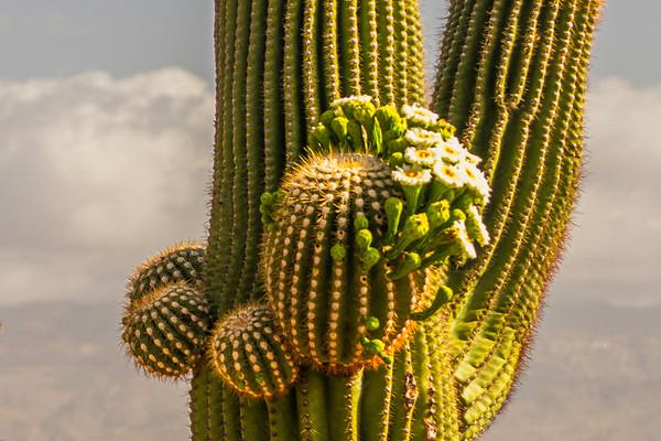 stylin' saguaro ...